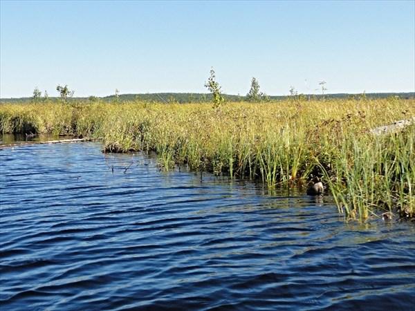 Кемь, плавучее болото