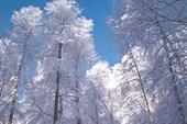 Утро после снегопада