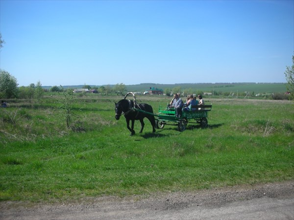 Прокат лошадей и карет