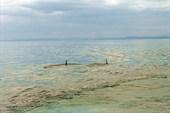 Охотское море. Косатки.