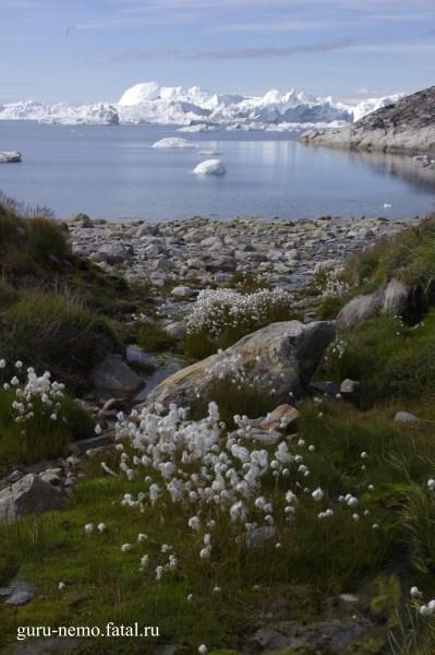 Бухта Sermermiut.