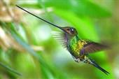 Mecheklyvii-kolibri13