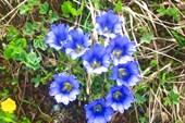 цветочки_гнездо