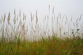 по высокой траве