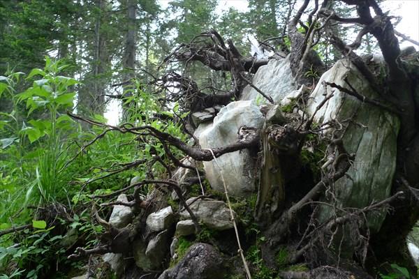 Камни в корнях