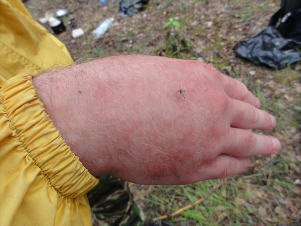 Казнь комарами