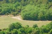 Сфинксы и буйволы Каралезской долины, дорога на Мангуп