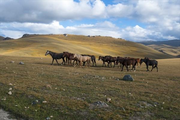И снова лошади