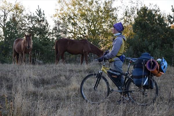 Вот мы сейчас махнуть велосипеды на лошадей