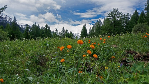 Цветущая долина Жомболока