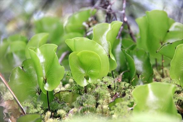Такие нежные зеленые листочки