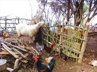 Домашние животные турков