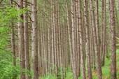Красивый лес в начале тропы