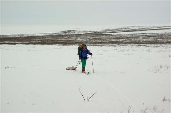 На Полярном сани - лучший друг лыжника