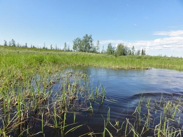 Река зарастает травой.