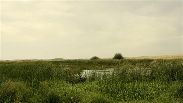 Заросшее русло реки Караганки
