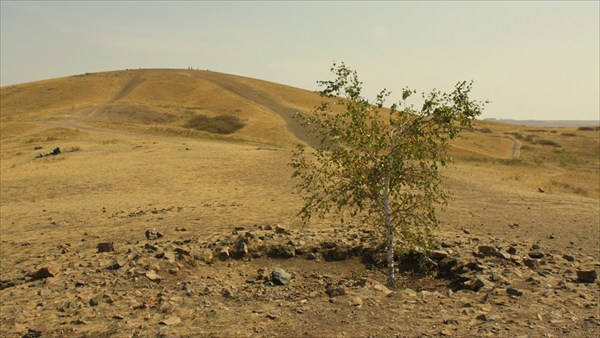 Дерево на выстыпе Покаяния