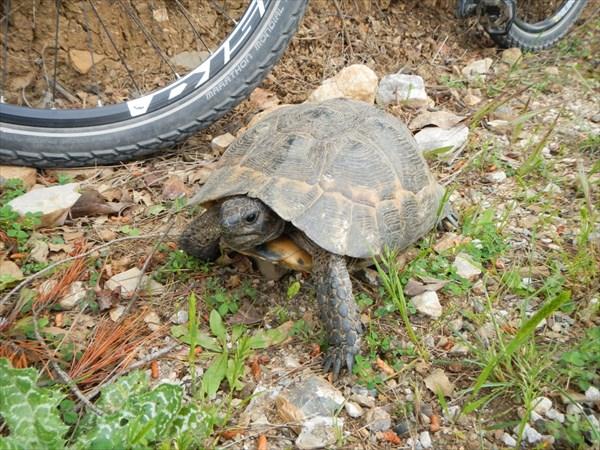 Черепаха :)