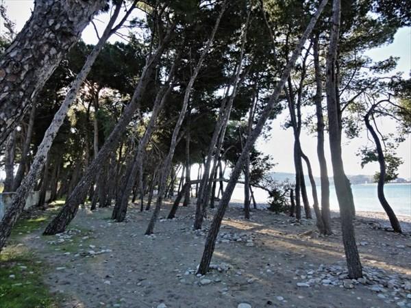 Деревья на набережной.