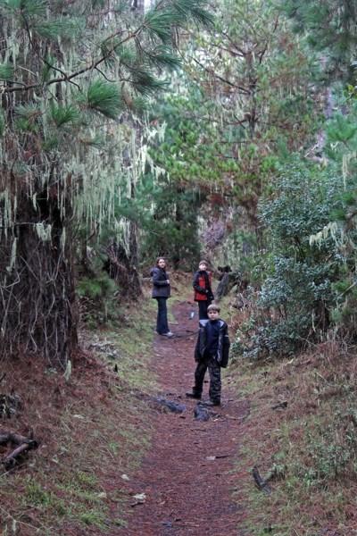 В дремучем лесу