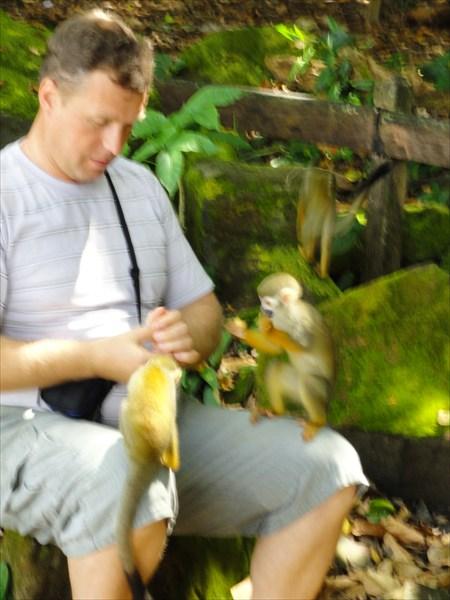 На острове обезьян - угощение французским печеньем обезъянок