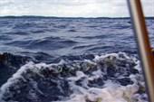 `Море` волнуется...