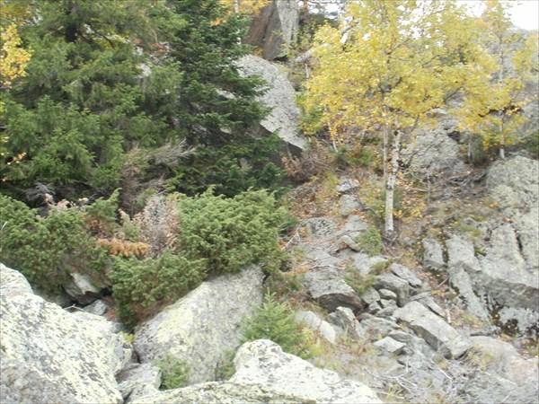 Можжевельник на камнях у Ицыла