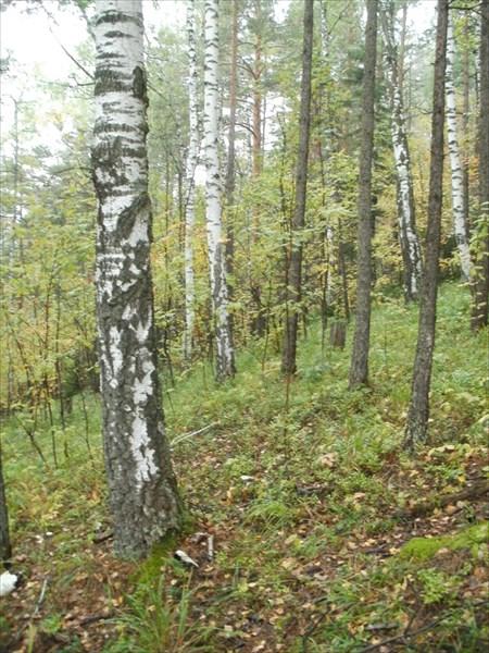 Спуск вдоль ЛЭП градусов 30, грунтовая дорога обходит его лесом