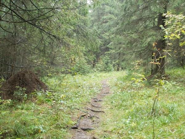Тропка в пригородном лесу