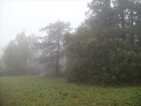 Верхушки лиственниц будто отморожены