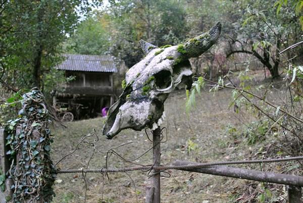 здесь живет лесной дух