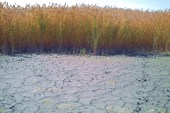 Вода ушла(осень)