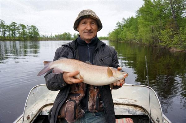 Ленок пойман в реке Нале