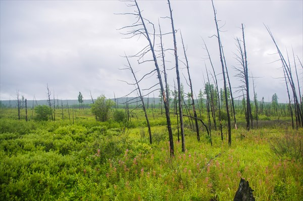 Тоджинские болота