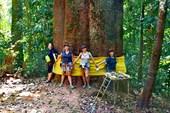 Зиплайн, самое большое дерево местности