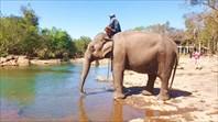 Купание слона на одном из водопадов Tad Lo