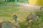 Зоопарк и аквариум