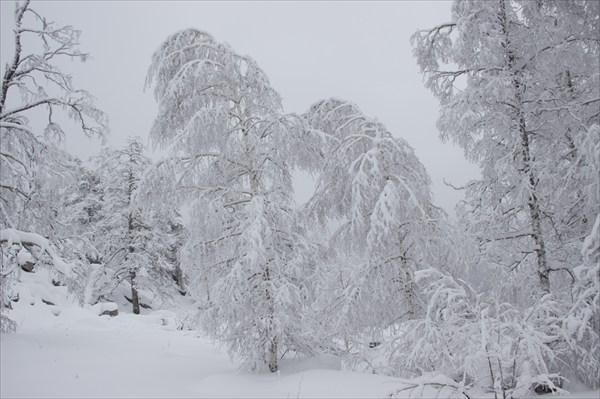 Лес Южного Урала