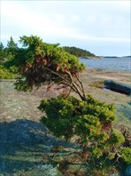 Очень сильный ветер все три дня
