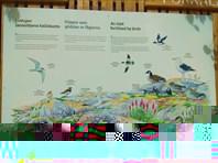 Тут много птиц