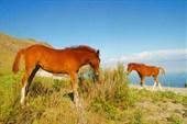 Байкал. Лошадь. бухта Арсо