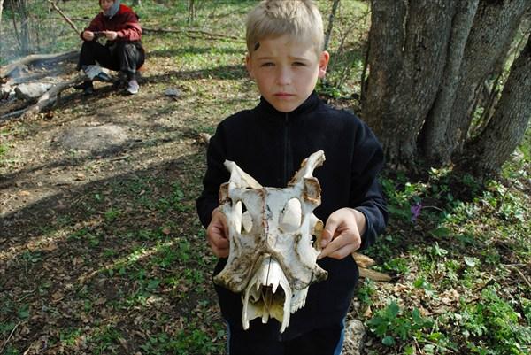 Скелет косули со склона Чатыр - Дага4
