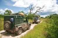 Safari20090145moremi