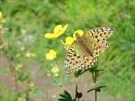 Еще одна бабочка