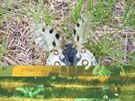 Бабочка. Красивая.
