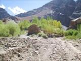 Посадки тополей, к которым заботливо подведена вода