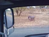 Слоненок