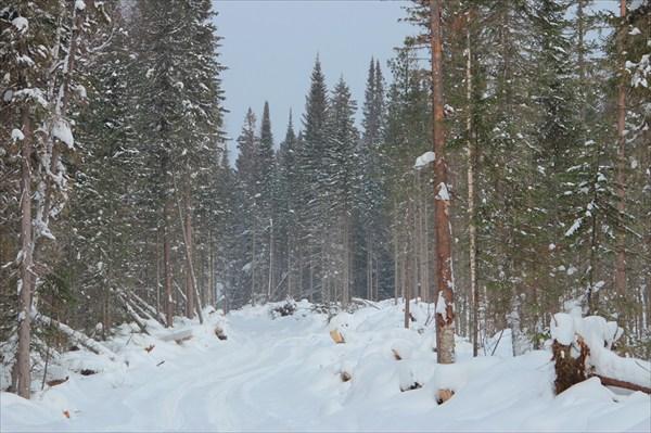 Красноярский край. Зимник в Назимово