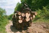здоровым лесовозам