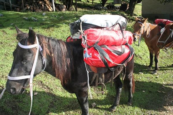 я маленькая лошадка, но стою очень много денег.